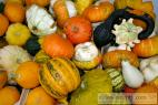 Recept Pumpkin compote - common gourd or common pumpkin