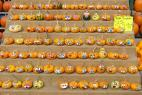 Recept Pumpkin compote - common gourd or common pumpkin