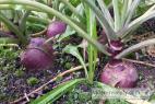 Recept Vegetable salad with lamb's lettuce - turnip (kohlrabi)